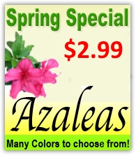spring_specials_home_page_2014